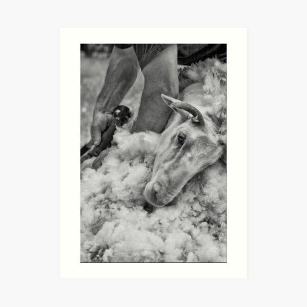 Click Go The Shears #3 Art Print