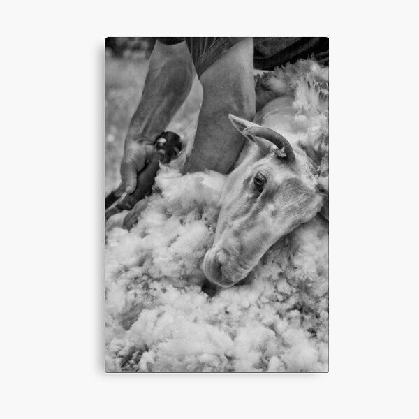 Click Go The Shears #3 Canvas Print