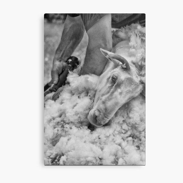 Click Go The Shears #3 Metal Print