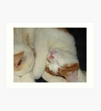Cutie Cats Art Print