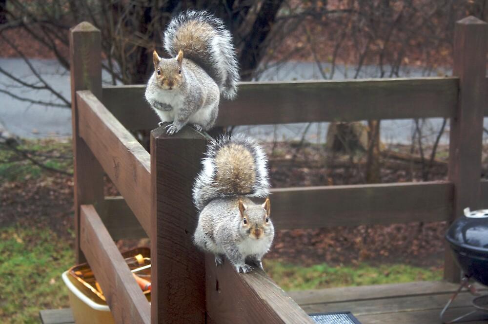 When squirrels attack  001 by Andrew Boysen