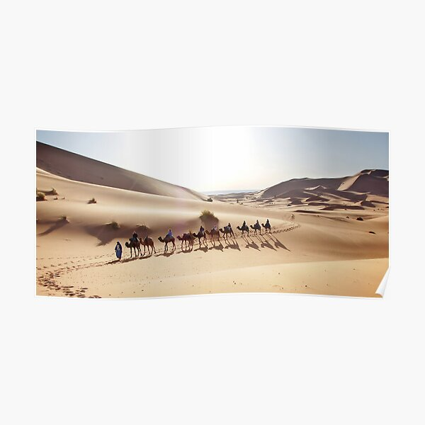 Camels in the Sahara Poster