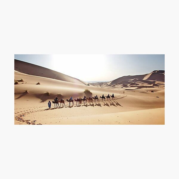 Camels in the Sahara Photographic Print