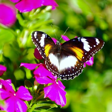 Lady Butterfly Visitor by artropica