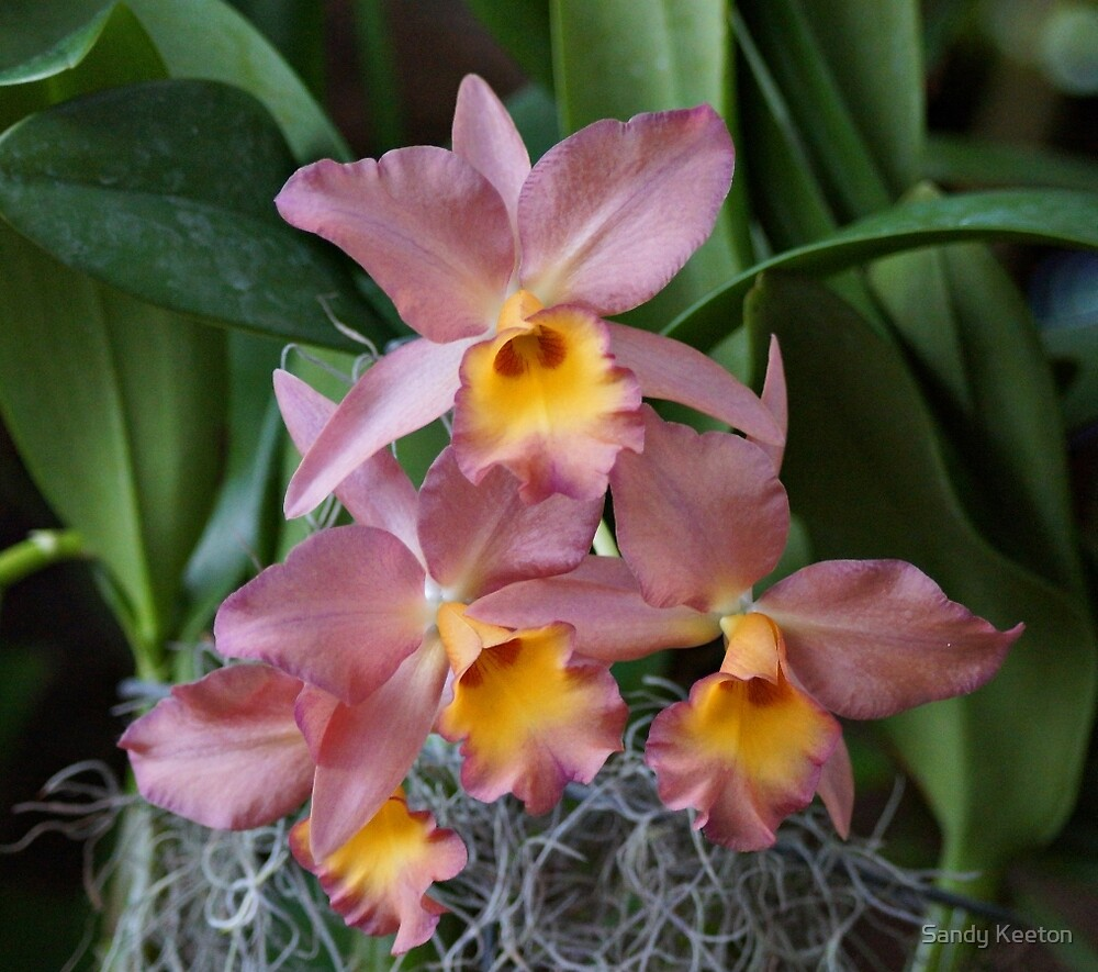 Orchids by Sandy Keeton