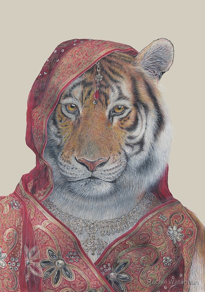 Indian Tiger by Rachel Waterman