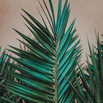 Palm Leaves on Pink Wall by banginT