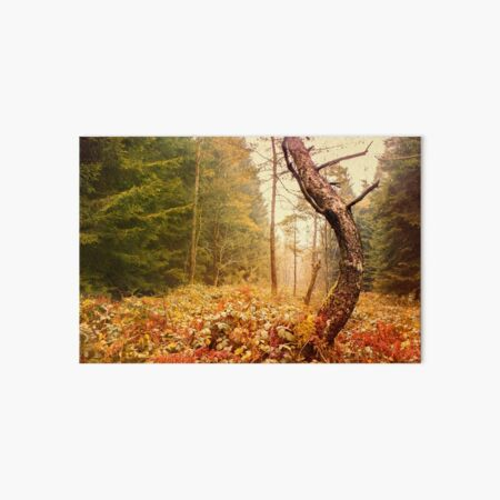 The Autumn Dancing Pine  Art Board Print