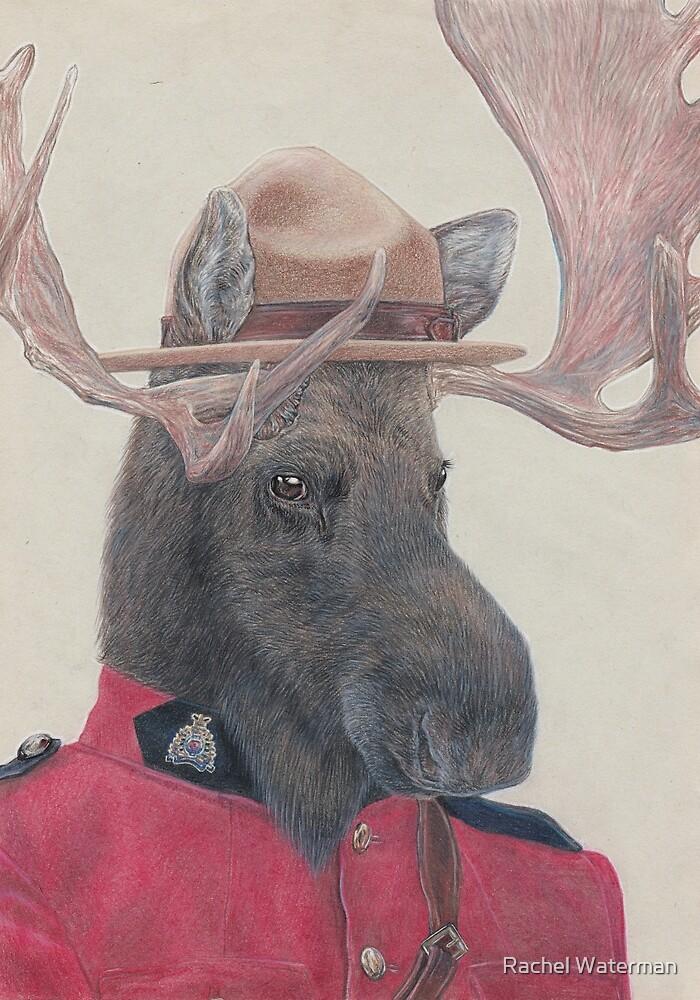 Canadian Moose by Rachel Waterman