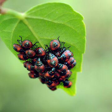 beetles 3 by jessrobbo