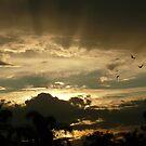 Sydney Sunset by SeeingTime