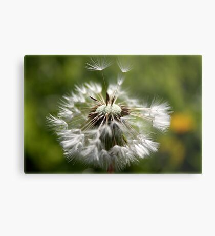 a wish or two ... Metal Print