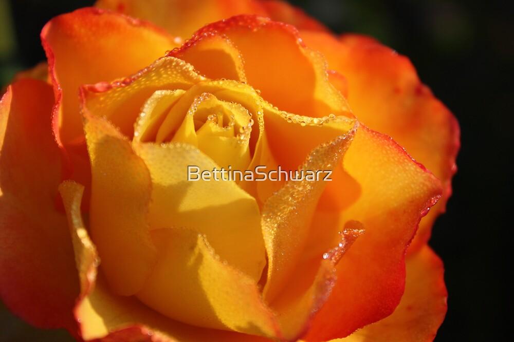 bright & glorious  by BettinaSchwarz