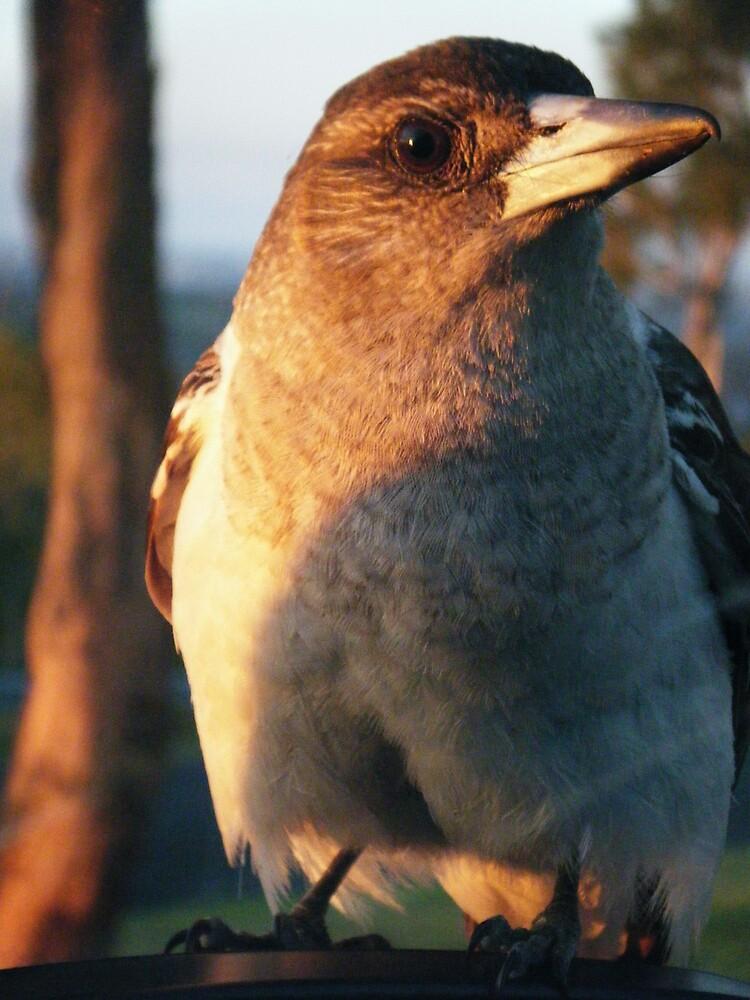 Baby Butcher Bird by SeeingTime