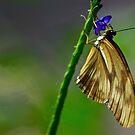 Butterfly Breakfast by Lynda Anne Williams