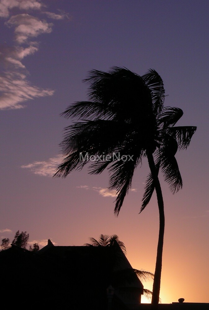 Palm Tree's Silhouette  by MoxieNox