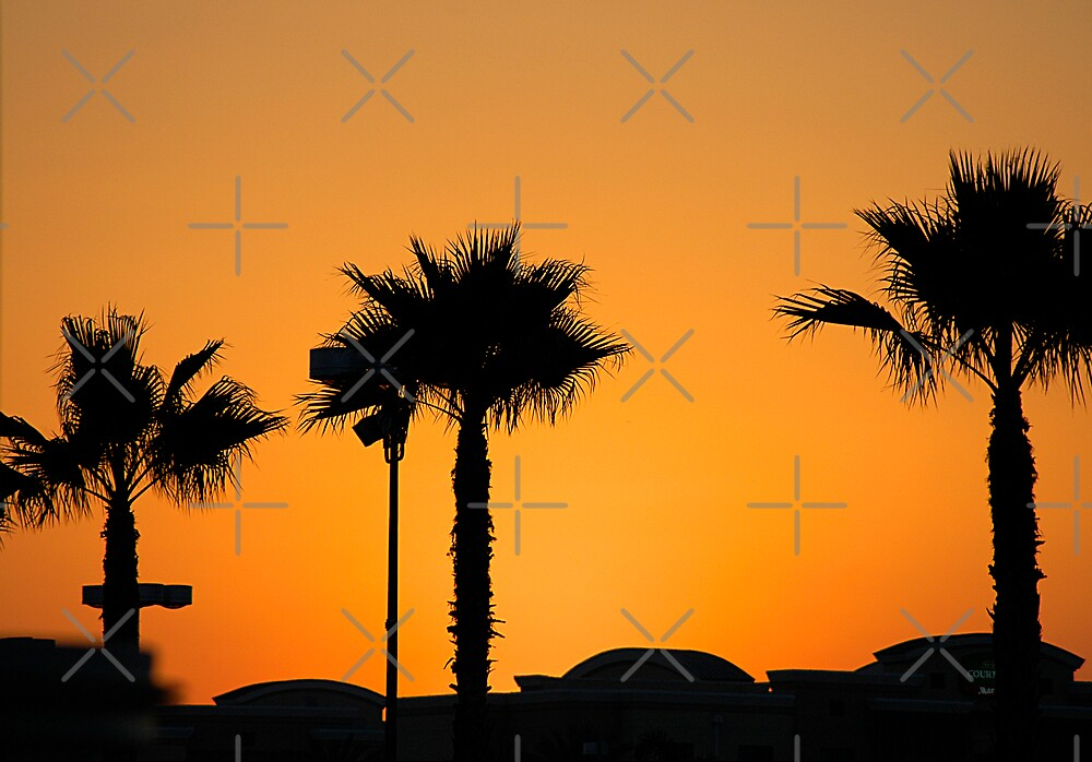 Palm Trees by Clayton Bruster