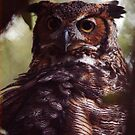 The Wise Owl by Clayton Bruster
