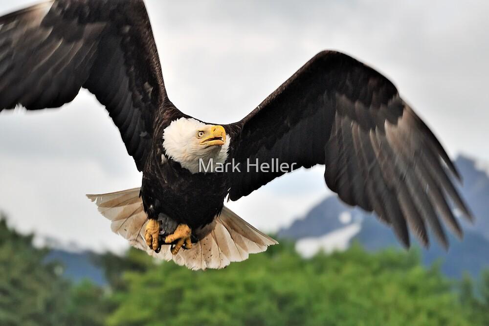 Eagle in Final Approach by Mark Heller