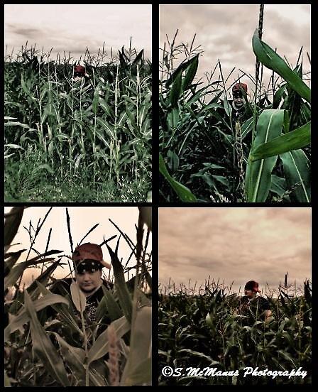 hidden in fields by Shauneen McManus
