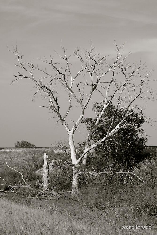 Tree by brandiforu66