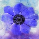 Feeling Blue by Catherine Hamilton-Veal  ©