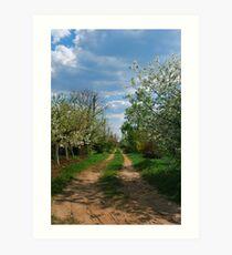 Rural road in spring Art Print