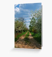 Rural road in spring Greeting Card