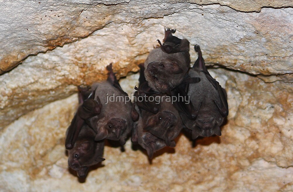 Cute Cave Dwellers....... by jdmphotography