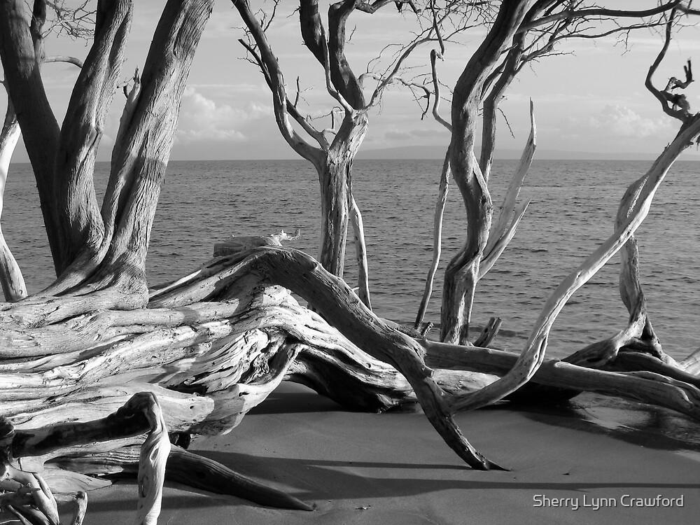 Beach Tree by Sherry Lynn Crawford