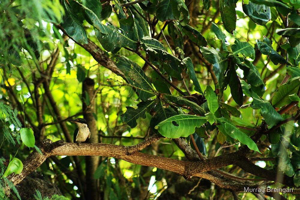 kingfisher  by Murray Breingan
