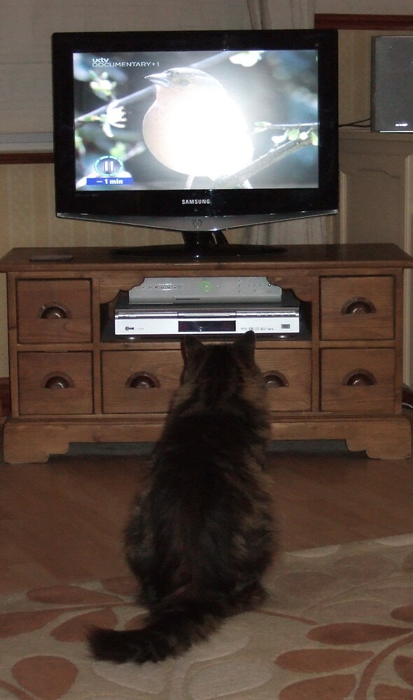 Cat watches TV by margpix