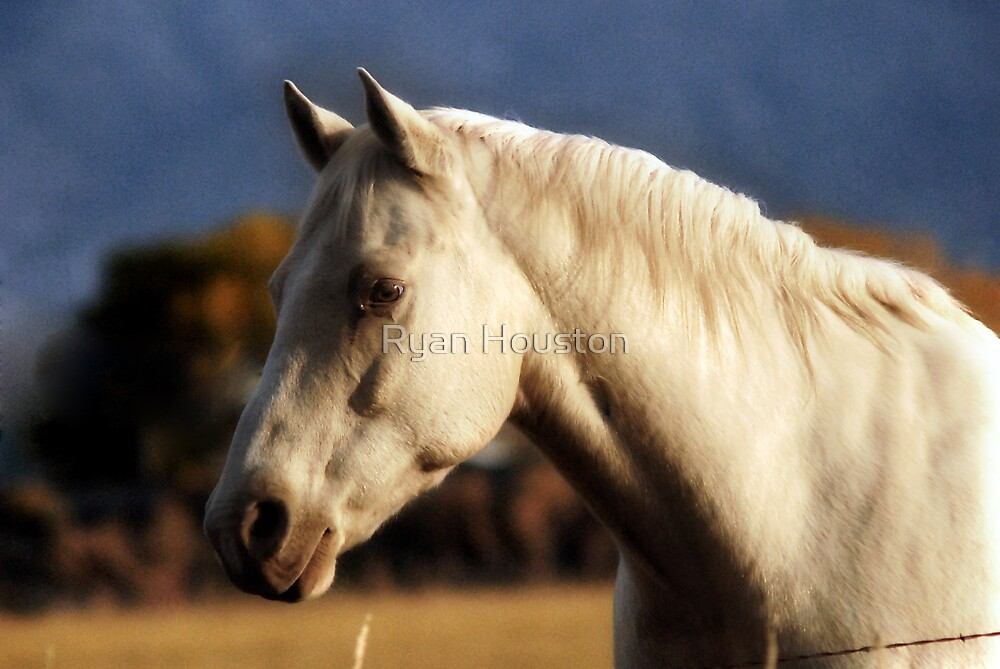 White Horse - Winter Colors by Ryan Houston