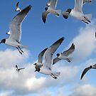 Laughing Gulls by Karl R. Martin