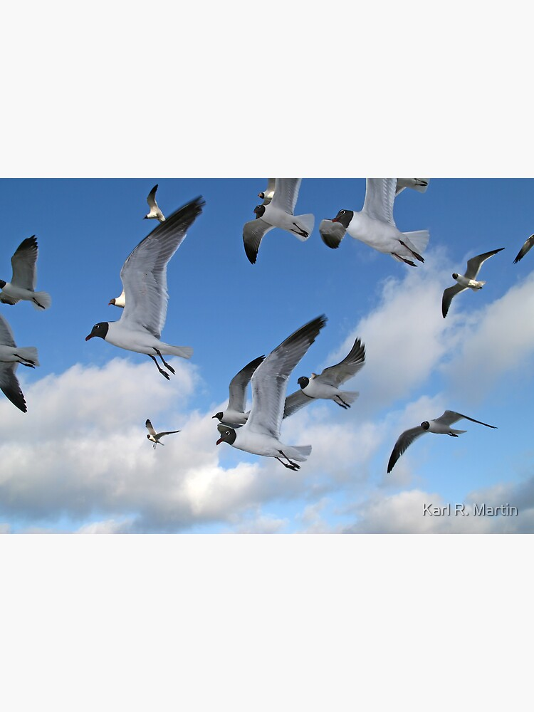 Laughing Gulls by SirEagle