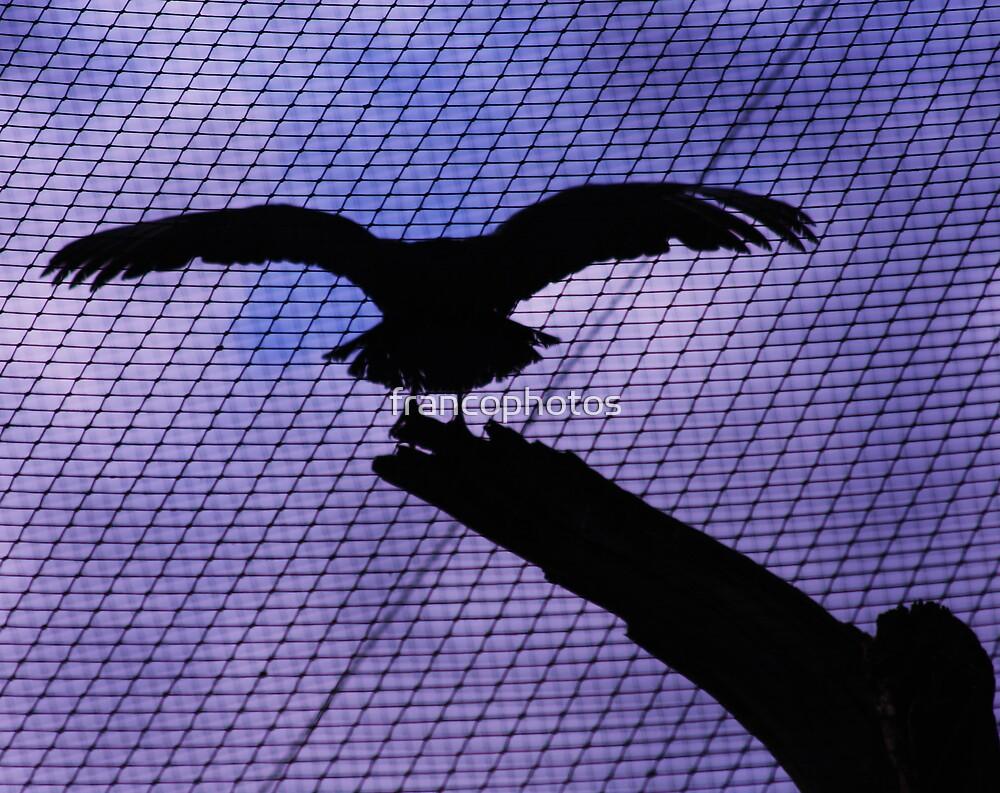 Vulture Silhouette by Franco De Luca Calce