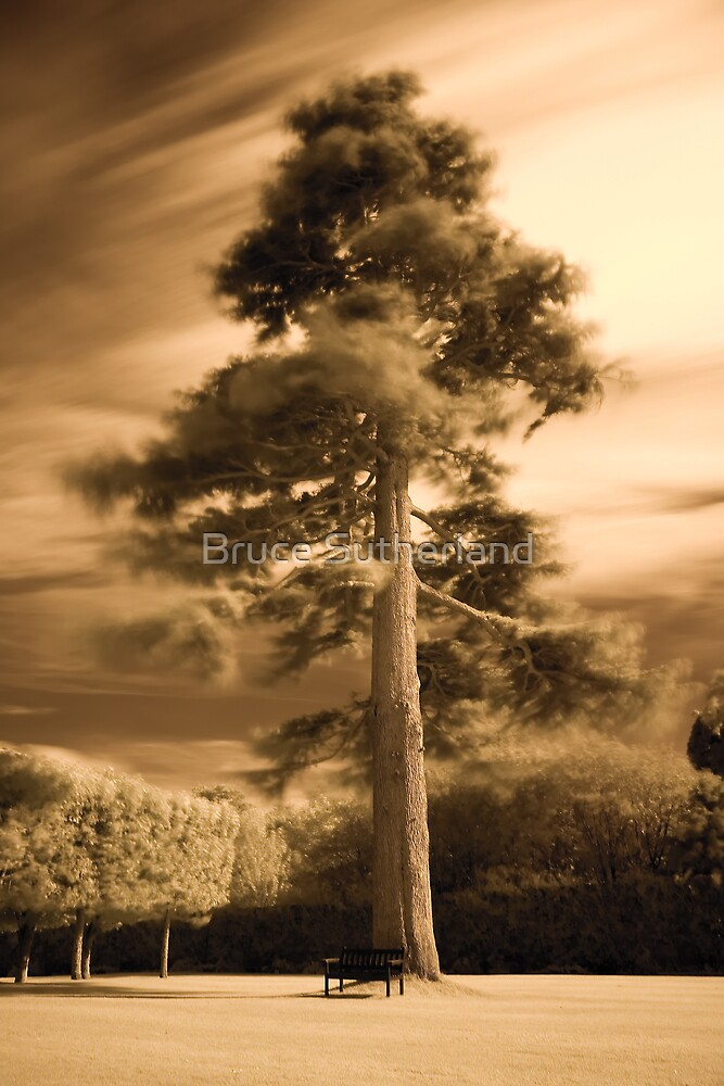 The Tree by Bruce Sutherland