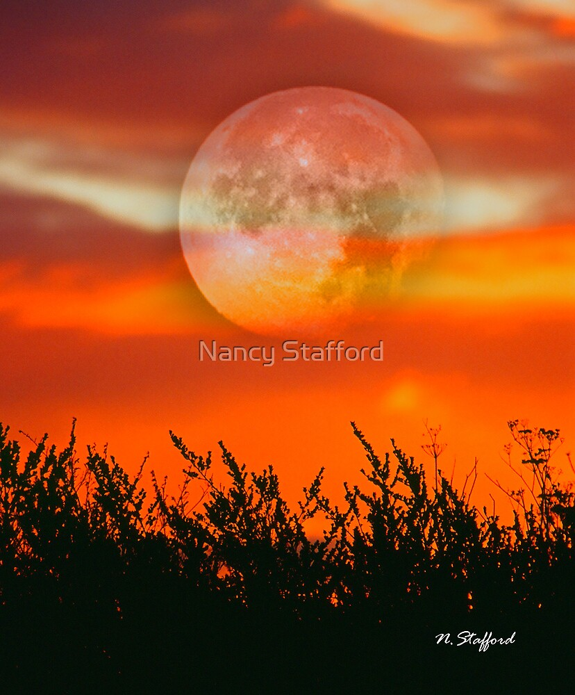 Fire of the Sky by Nancy Stafford