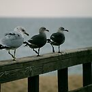 Seagull Patrol by Pamela Hubbard
