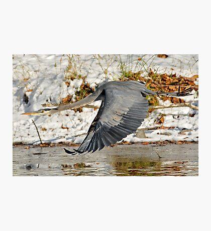 Big for a Snow Bird Photographic Print