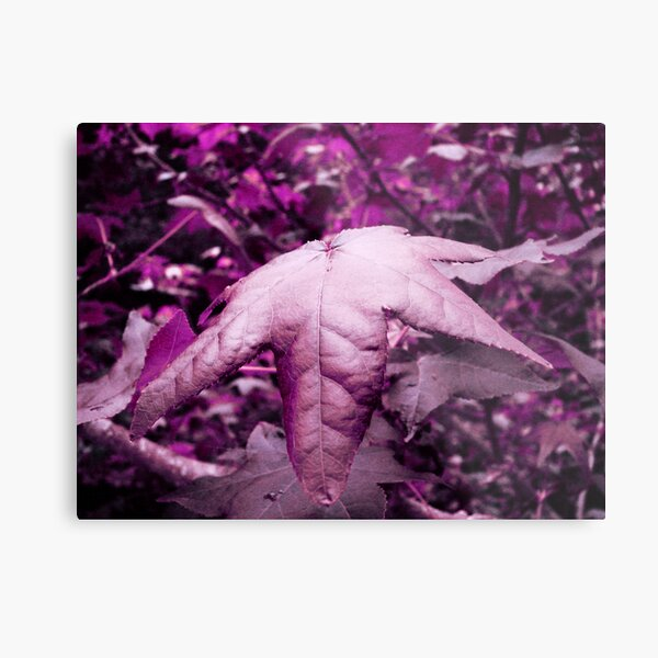 Violet Illusion Metal Print