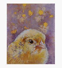 Chick Photographic Print