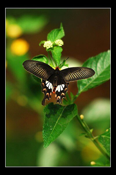 Butterfly by Shobingeorge