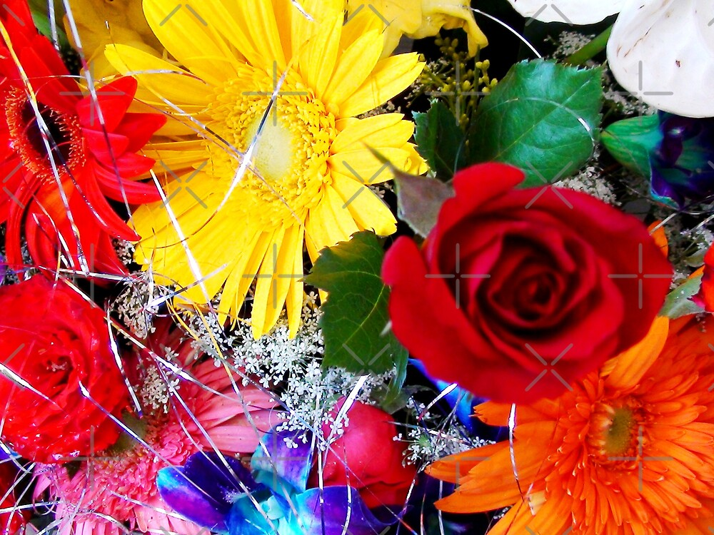 Christmas flowers by nasera