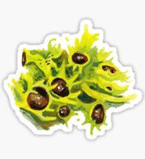Black Eyed Wolf Lichen Sticker