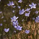 Australian Wild Flowers #1 by Paul Gilbert