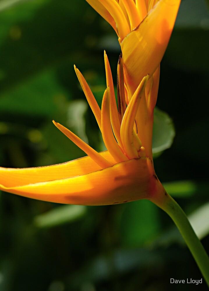 Spiky Orange by Dave Lloyd
