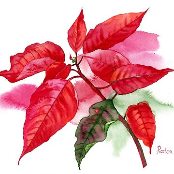 Red Poinsettia with Green Leaf by piacheva