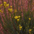 Australian Wild Flowers #5  by Paul Gilbert
