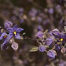 Australian Wild Flowers #7  by Paul Gilbert
